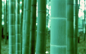 Bamboo close-up, bokeh